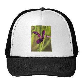 Louisiana Purple Gamecock Iris Cap
