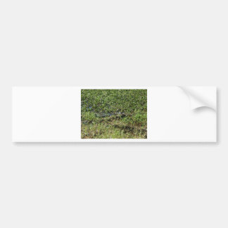 Louisiana Swamp Alligator in Jean Lafitte Bumper Sticker