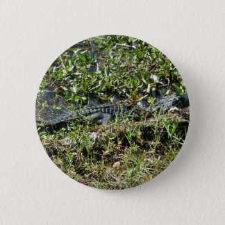 Louisiana Swamp Alligator in Jean Lafitte Close Up 6 Cm Round Badge