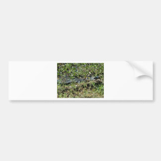 Louisiana Swamp Alligator in Jean Lafitte Close Up Bumper Sticker