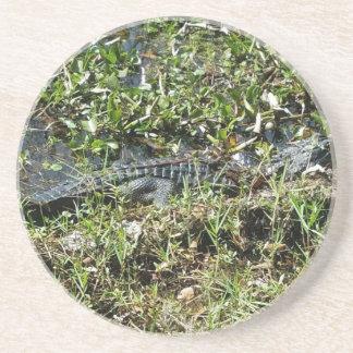 Louisiana Swamp Alligator in Jean Lafitte Close Up Coaster