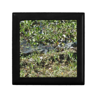 Louisiana Swamp Alligator in Jean Lafitte Close Up Gift Box