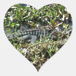 Louisiana Swamp Alligator in Jean Lafitte Close Up Heart Sticker