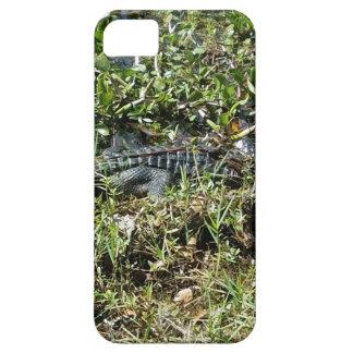 Louisiana Swamp Alligator in Jean Lafitte Close Up iPhone 5 Cover