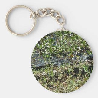 Louisiana Swamp Alligator in Jean Lafitte Close Up Key Ring