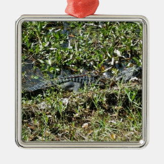 Louisiana Swamp Alligator in Jean Lafitte Close Up Metal Ornament