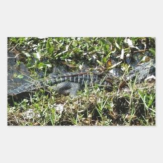 Louisiana Swamp Alligator in Jean Lafitte Close Up Rectangular Sticker