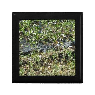 Louisiana Swamp Alligator in Jean Lafitte Close Up Small Square Gift Box
