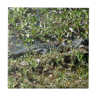 Louisiana Swamp Alligator in Jean Lafitte Close Up Tile