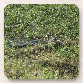 Louisiana Swamp Alligator in Jean Lafitte Coaster