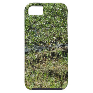 Louisiana Swamp Alligator in Jean Lafitte iPhone 5 Cases