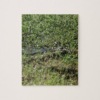 Louisiana Swamp Alligator in Jean Lafitte Jigsaw Puzzle