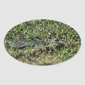 Louisiana Swamp Alligator in Jean Lafitte Oval Sticker