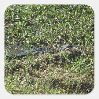 Louisiana Swamp Alligator in Jean Lafitte Square Sticker