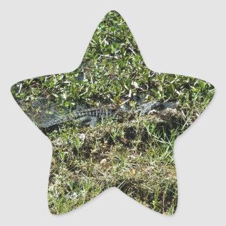 Louisiana Swamp Alligator in Jean Lafitte Star Sticker