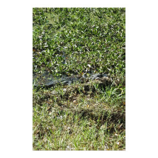 Louisiana Swamp Alligator in Jean Lafitte Stationery