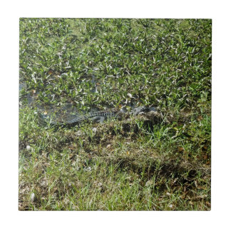 Louisiana Swamp Alligator in Jean Lafitte Tile