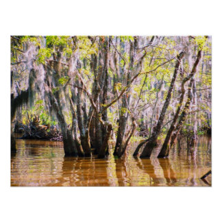 Louisiana Swamp Poster