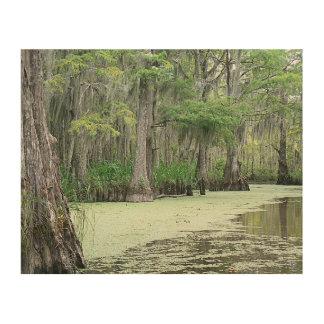 Louisiana Swamp Wood Canvas