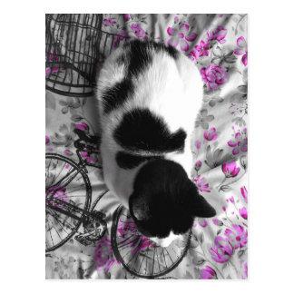 Lounging Cat Postcard