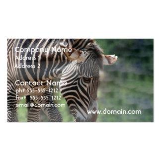 Lovable Zebra Pack Of Standard Business Cards