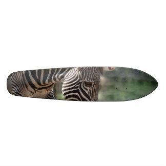 Lovable Zebra Skate Decks
