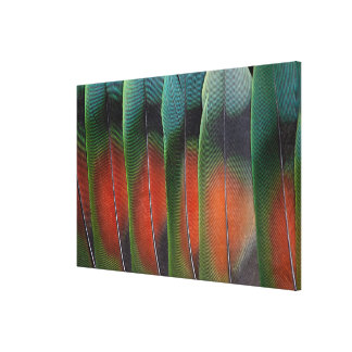 Love Bird Tail Feather Design Canvas Print