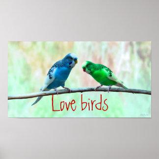 Love birds, colorful Parakeets, elegant Poster