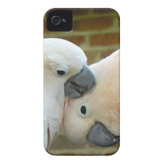 Love Birds iPhone 4 Case-Mate Case