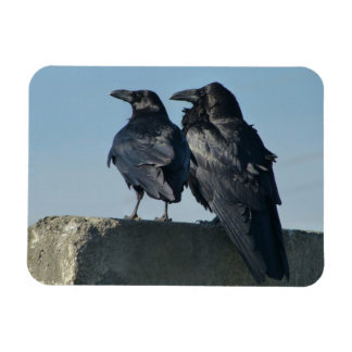 Love Birds Magnet