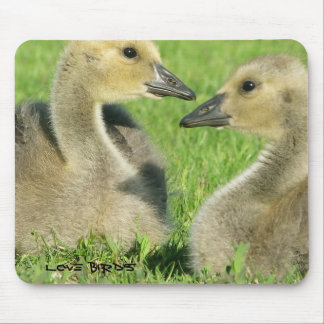 Love Birds- Original Photo Mouse Pad