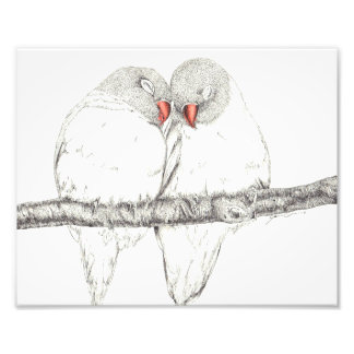 Love Birds Photo Print