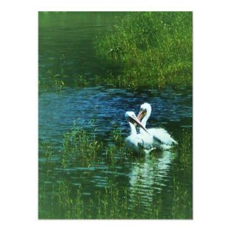 Love Birds white pelican couple MWUH! Card