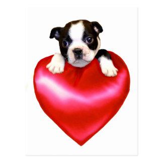 Love Boston Terrier postcard