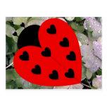 Love Bug Post Card