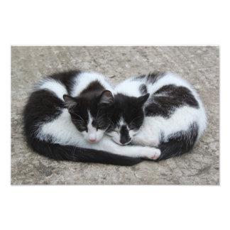 Love Cats Print Photo Art