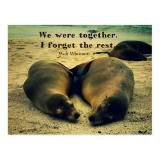 Love couple quote sea lions on the beach postcard