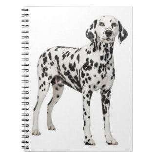 Love Dalmatian Puppy Dog - Spotted Fire Dog Notebook