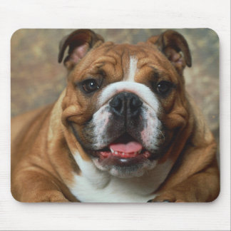 Love English Bulldog Puppy Dog  Portrait  Mousepad