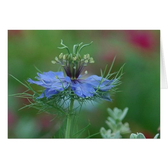 Love in a Mist Card