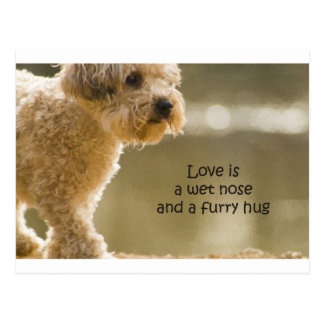 Love Is A Wet Nose And A Furry Hug Postcard