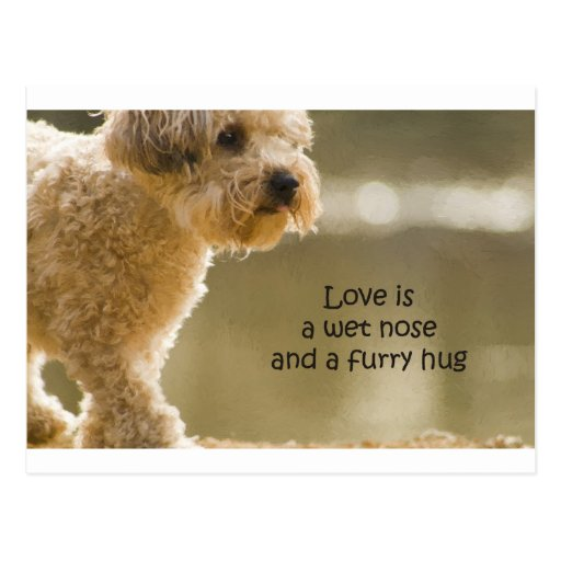 Love Is A Wet Nose And A Furry Hug Post Card