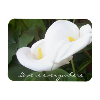 Love is Everywhere Calla Lily Magnet