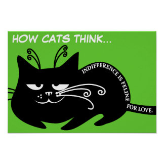 Love letter from my cat: speaking feline language poster