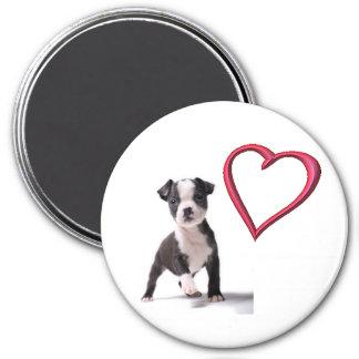 Love My Boston Puppy Dog Magnet