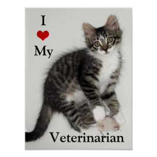 Love My Veterarian Zorro Kitty Poster