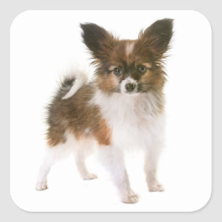 Love Papillon Puppy Dog Hello, Miss You Square Sticker