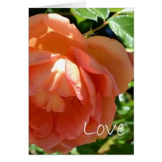 Love-Peach Rose Greeting Card