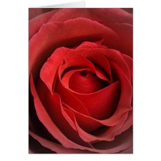 Love Rose Card