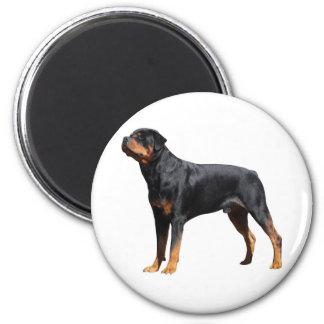 Love Rottweiler Puppy Dog 6 Cm Round Magnet